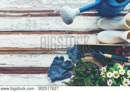 Top View On Gardening A Shovel Filled With Soil And Flowers Potted Tool In The Garden Summer Spring