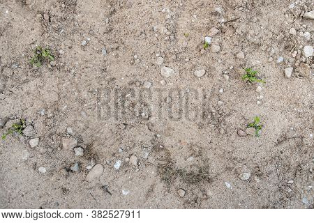 Ground Texture - Close-up Of A Fragment Of Compact And Stony Ground With A Small Amount Of Weeds - R