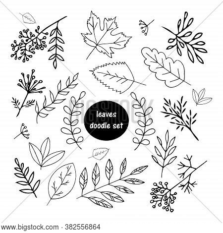 Leaves Hand Drawn In Doodle Style. Set Of Elements For Design Sticker, Poster, Card, Icon. Vector, S