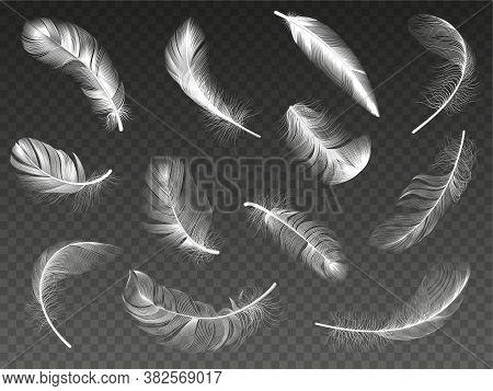 White Realistic Feather. Fluffy Angel Twirled Feathers, 3d Bird Feather, Swan Or Dove Wings Plumage