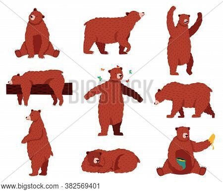 Brown Grizzly Bear. Cartoon Wild Cute Bears, Forest Fur Animal, Sitting, Playing And Sleeping Wildli
