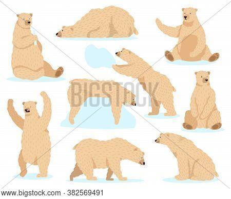 Polar White Bear. Arctic Snow Bear, Cute North Bear Character, Angry Fur Wildlife Mammal Character I