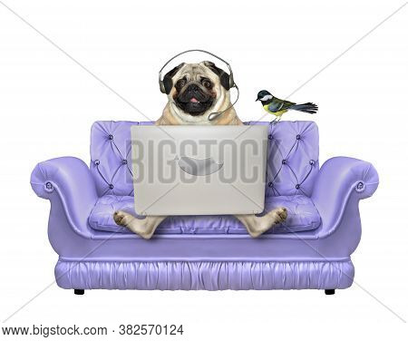 A Pug Dog In Headphones Is Sitting On A Divan And Using A Laptop. A Bird Is Next To Him. White Backg