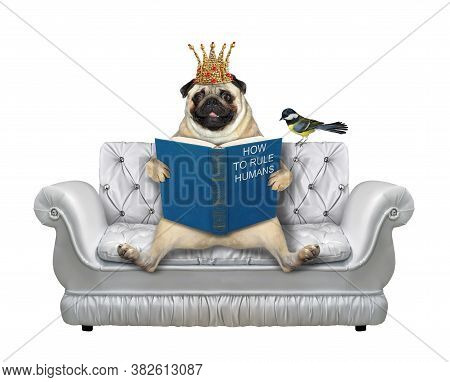 A Pug Dog In A Gold Crown Is Sitting On A Divan And Reading A Book. A Bird Is Next To Him. White Bac