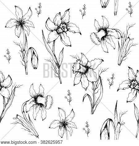 Seamless, Modern Pattern Of Monochrome  Daffodils. Hand-drawn Flowers (primroses) In The Style Of Re