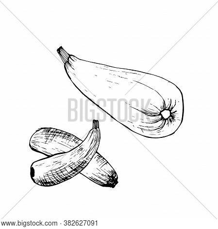 Zucchini Vintage Retro Engraving. Zucchini Vegetable Cartoon Illustration.
