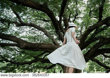 Woman Wearing White Dress Enjoying Good Moment An Standing Under The Giant Monkey Pod Trees In Kanch