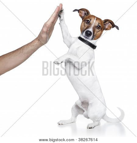 dog with paw high five and a male hand poster