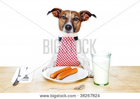 dinner meal at table dog hungry to start eating poster