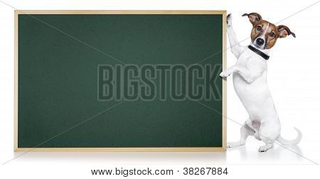 banner placeholder dog holding it and looking poster