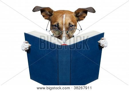 Reading Book Dog