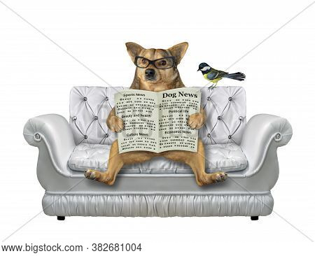 A Beige Dog In Glasses Is Sitting On A Divan And Reading A Newspaper. A Bird Is Next To Him. White B
