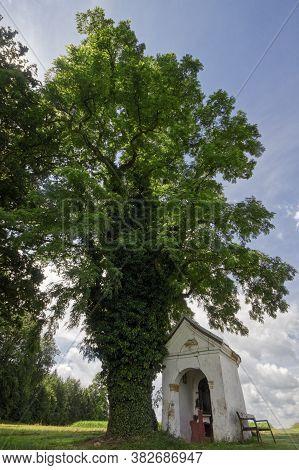 Black Locust Tree With A Small Chapel, At Franking, Upper Austria