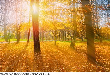 Fall picturesque park landscape. Fall trees with yellowed foliage in October morning park. Colorful fall landscape in bright tones, fall park nature. Fall background, colorful fall scene. Fall park in sunny weather