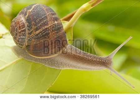 Snail On The Sheet