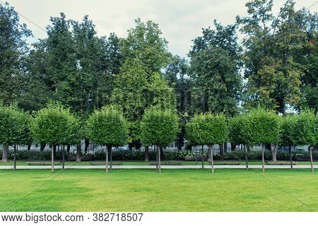 Beautiful City Public Garden Park With A Row Of Round Shaped Trees And Green Grass.