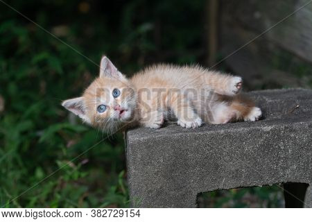 Cute Yellow Tabby Making A Funny Face