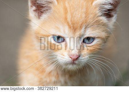 Portrait Of Cute Yellow Tabby