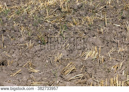 Arable Agricultural Land In Terms Of Cereals Products For Grain And Food Production,