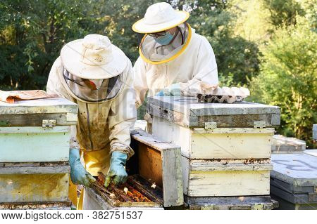 Beekeeper On Apiary. Beekeeper Is Working With Bees And Beehives On The Apiary. High Quality Image