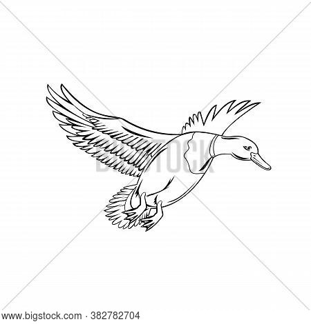 Retro Style Illustration Of A Drake Male Bird Mallard, A Dabbling Duck That Is Subfamily Anatinae Of