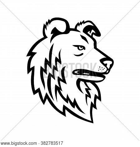 Mascot Icon Illustration Of Head Of Shetland Sheepdog, Shetland Collie, Dwarf Scotch Shepherd Or Als