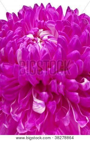detailed shot of pink flower