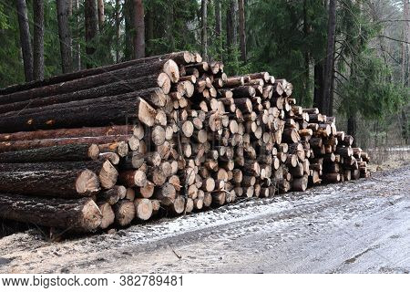 Stack Of Cut Pine Tree Logs In A Forest. Wood Logs, Timber Logging, Industrial Destruction, Forests