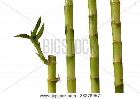 green spa bamboo