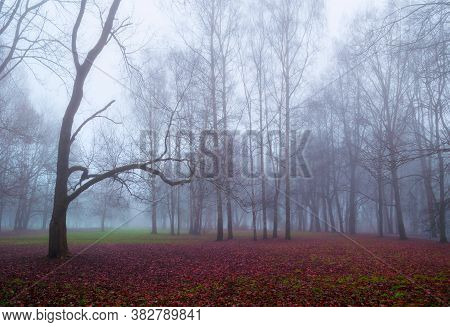 Autumn forest landscape. Foggy forest park with old bare forest trees and fallen red autumn leaves on the ground. Autumn forest background, autumn forest nature scene