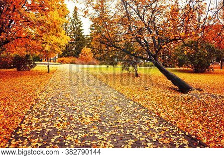 Fall landscape. Fall alley in the city fall park. Colourful fall park alley in cloudy fall weather, fall cloudy landscape view. Fall nature in October. Colorful fall park alley