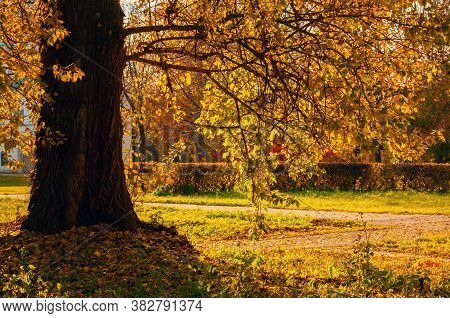 Fall landscape. Fall trees with yellow fall foliage in the fall city October park, sunny fall nature scene. Fall park landscape scene, colorful fall nature view. Fall tree in the fall October park