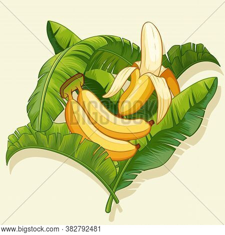 Bananas And Banana Peel With Banana Leaf Design. Vector Illustration