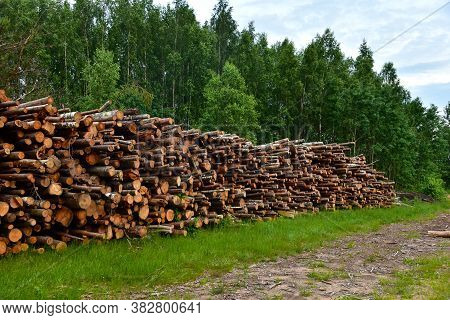 Large Quantity Of Cut And Stacked Pine Timber In Forest For Transported. Stack Of Cut Logs Backgroun