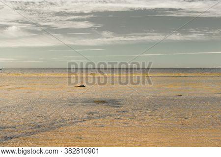 Evening Calm On The Gulf Of Finland (gulf Of Bothnia)