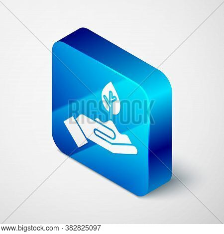Isometric Plant In Hand Of Environmental Protection Icon Isolated On Grey Background. Seed And Seedl