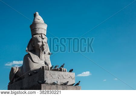 Old Egyptian Sphinx Sculpture From Gray Granite Against Blue Sky, Many Pigeons Sitting On Ancient Sc