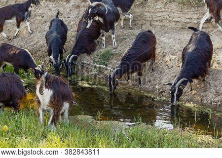 Exploitation Of Goat Cattle.