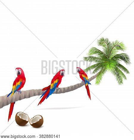 Vector Palm Tree With Parrots Isolated On White Background