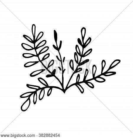 Small Bush Of Grass Hand Drawn Doodle. Sketch Twigs With Oblong Leaves. Black Outline Plant For Post