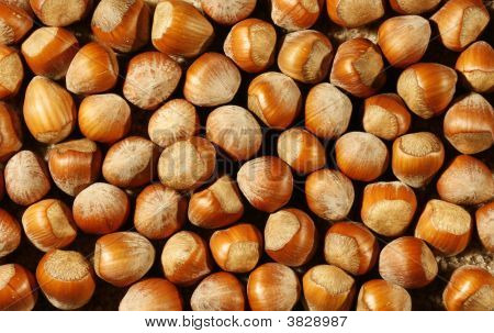 Nut Background