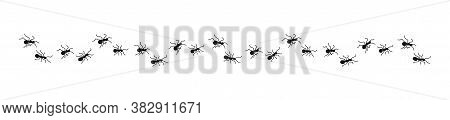 Ants Marching Silhouette. Vector Isolated Illustration. Ant Line Banner.