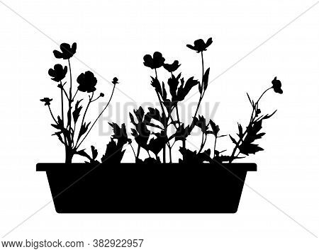 Vector Flowers In Planter Isolated On White Background