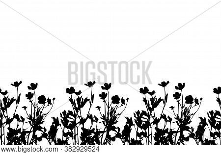 Seamless Buttercup Flowers - Hairy Buttercup (ranunculus Sardous) Border Isolated On White Backgroun