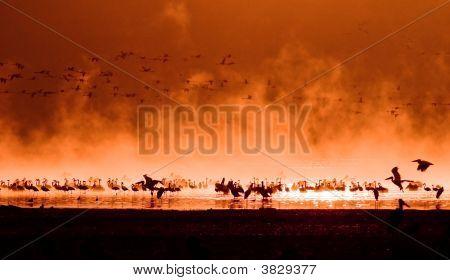 Flocks Of Flamingos In The Sunrise