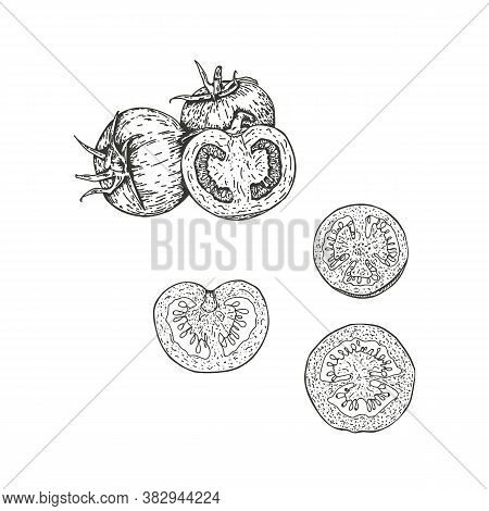 Vector Illustration Of Tomatoes Drawn By Hand. Isolate The Tomatoes And Cut Them In Half. Vegetable