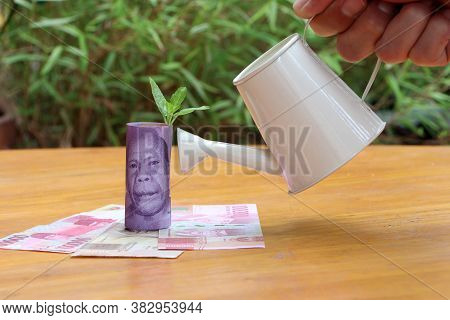 Rolled Banknote Money Ten Thousand Indonesia Rupiah With Young Plant Grow Up On The Stack Of Money A