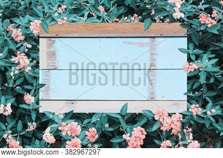 Green Leaves Above And Old Wooden Floor Background
