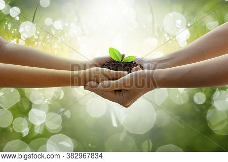 Adults Baby Hand Tree Environment Earth Day In The Hands Of Trees Growing Seedlings. Bokeh Green Bac