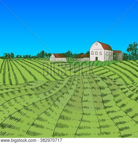 Vector Colorful Farm Illustration, Hand Drawn Farm Field And House, Summer Rural Landscape, Bright C